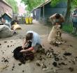 26 mei Schaapscheerdersfeest bij Kinderboerderij Zegersloot