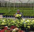 TV tuinman Rob Verlinden opent Open Kwekerijdag 2019
